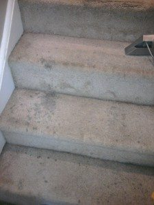 carpeted stairs before being cleaned