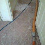 carpet with paint damage